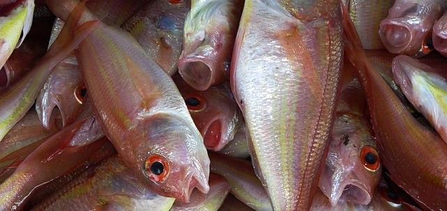דגים באלבניה