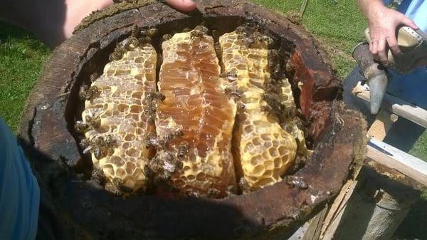 הדגמת רדיית דבש מסורתית בפסטיבל Mjalt'Fest