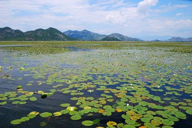 אגם שקודרה
