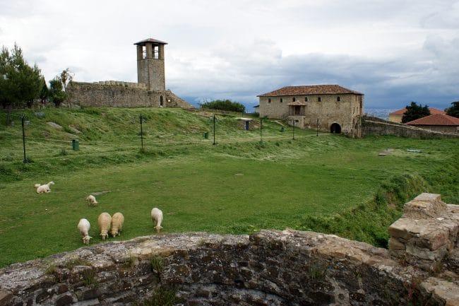כבשים במרעה בעמק Shala העליון